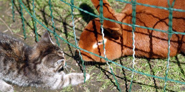 La morphologie du lapin