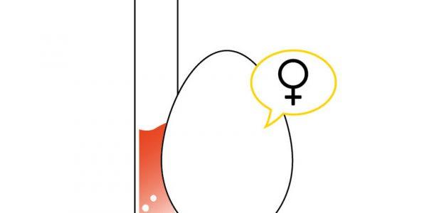 Connaître le sexe d'un oeuf fécondé?